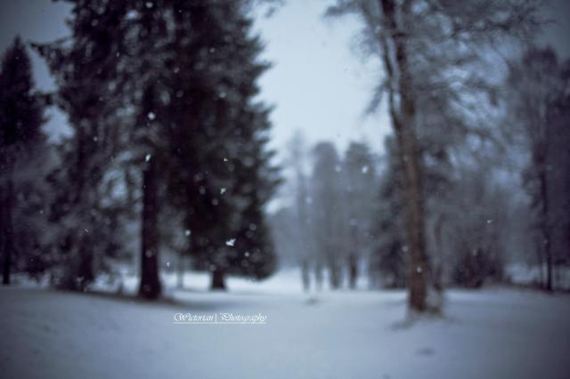 Snøen daler