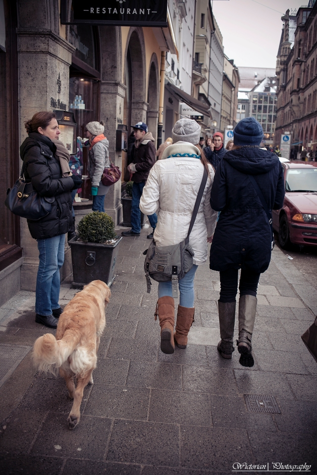 This dog behaved so good, tagging along with his owner.